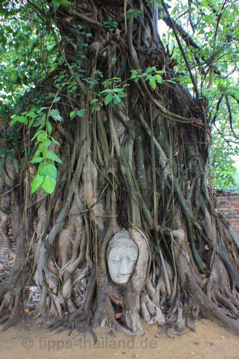 AyutthayaBuddhakopfinFeige