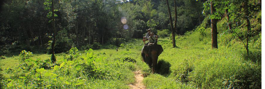 Thailandelefanten